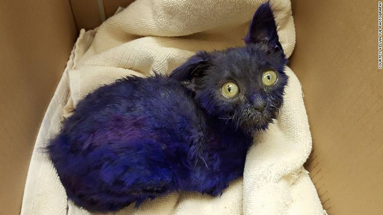 Why is this kitten purple?