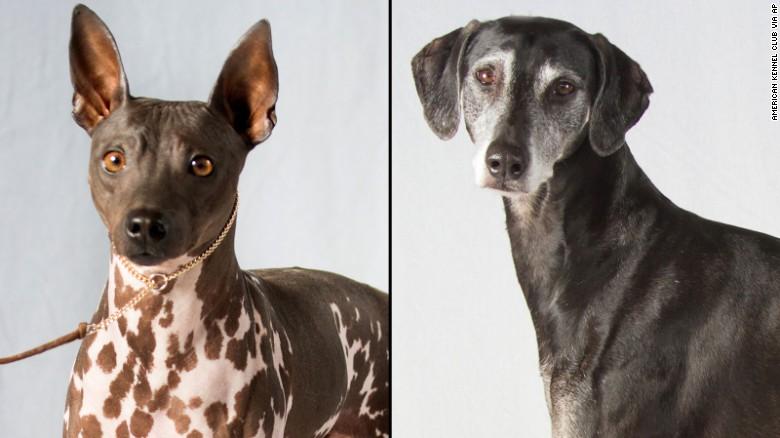new dog breeds 2016