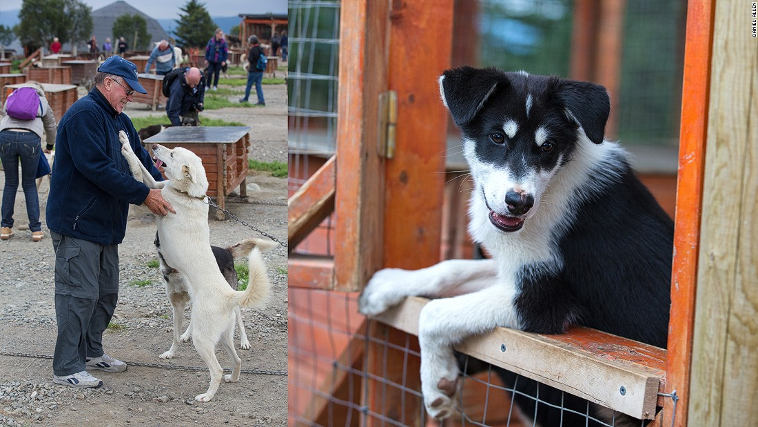 About 200 miles (350 kilometers) north of the Arctic Circle, the northern Norwegian city of Tromso is home to approximately 70,000 people. The Tromso Wilderness Center, on nearby Kvaloya Island, is home to over 250 fully grown huskies and puppies, offering visitors a chance to go dog sledding during winter months.<br />