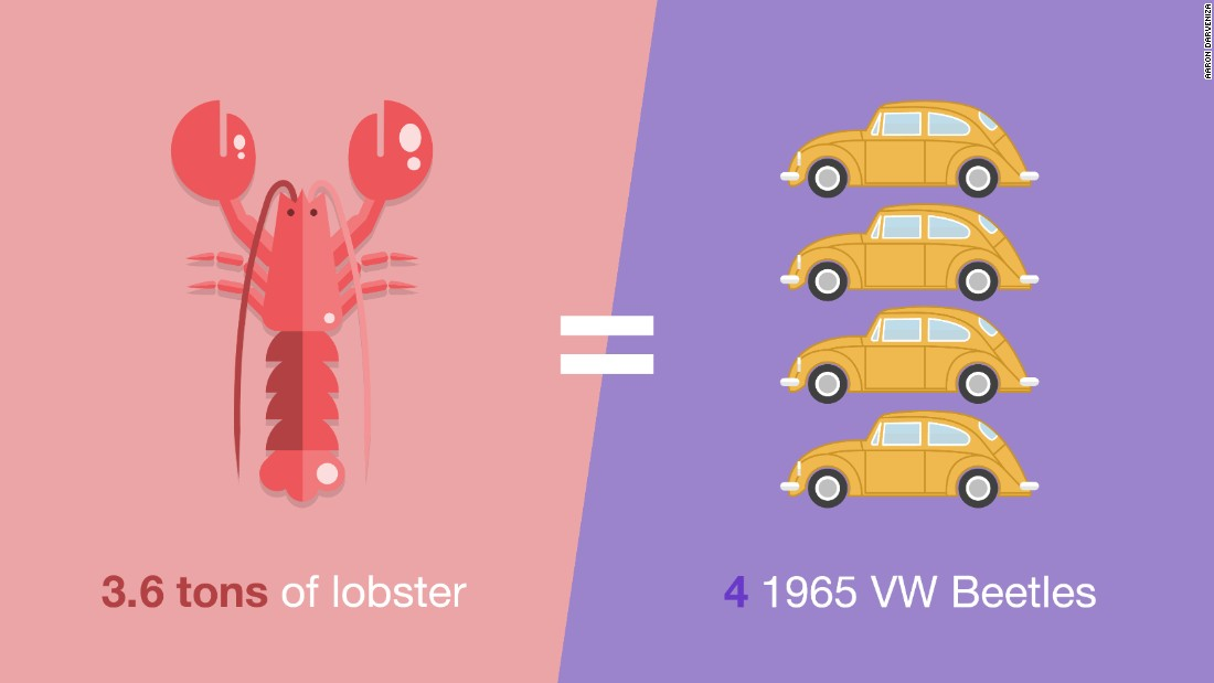 Emirates Flight Catering gets through 3.6 tons of lobster each year. Other fishy statistics include 80 tons of smoked salmon and 165 tons of salmon fillet.