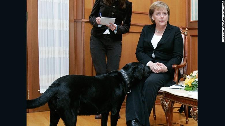 Merkel looks uncomfortable as Putin's Labrador Koni comes near her in Sochi, Russia, in 2007.