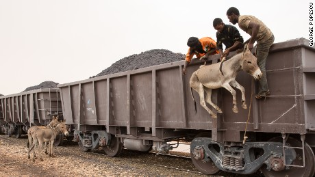 A donkey is loaded using ropes while other two donkeys wait to be boarded on top of a train loaded with iron ore that crosses the Sahara desert from the mine at Zourat, in northern Mauritania, to the Nouadhibou harbor, on the Atlantic coast of West Africa, as seen on 1st of October 2015.