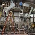 titanosaur recreation