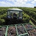 Uruguaytravel-vineyard4