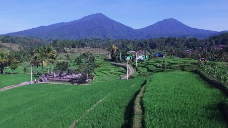 60 second vacations bali rice fields travel _00001313.jpg