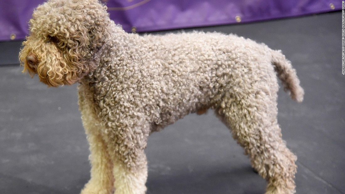 Westminster Dog Show Top Prize