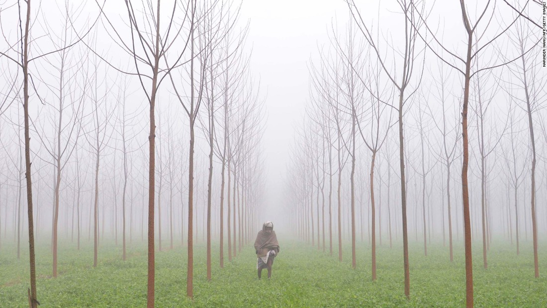 A farmer walks through his fields on the outskirts of Amritsar. Fog is common in the region in winter, with average January low temperatures reaching 5 degrees Celsius (41 degrees Fahrenheit).