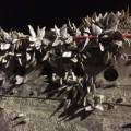 mh370 barnacles