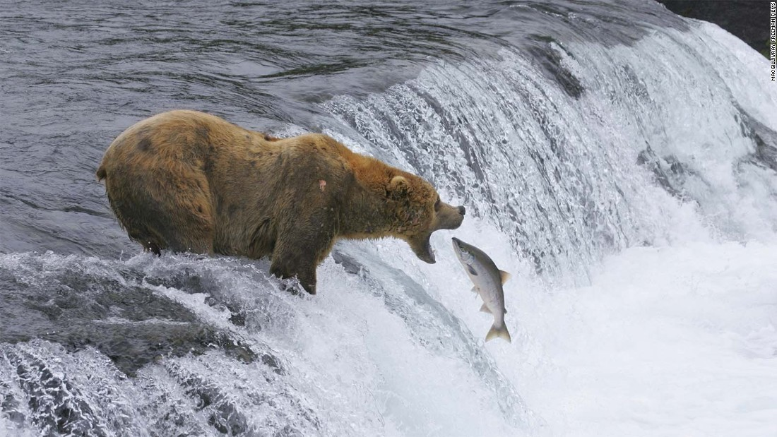 Katmai National Park and Preserve in Alaska is one of the nation's best places to see brown bears.