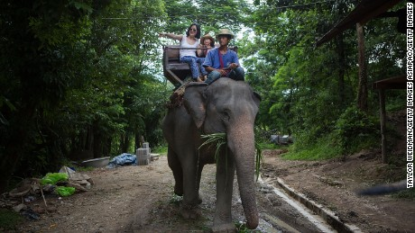 Despite being denounced by multiple animal welfare groups, elephant riding remains a popular activity for tourists visiting Thailand. (File photo)