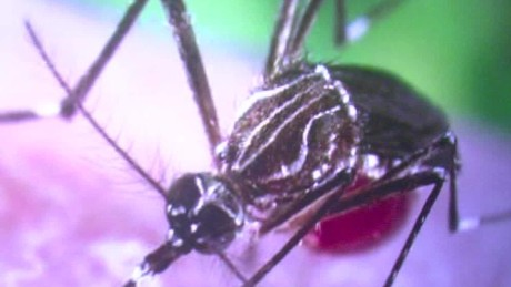 nyregion zika virus female male sexual transmission