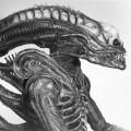 alien bolaji 3