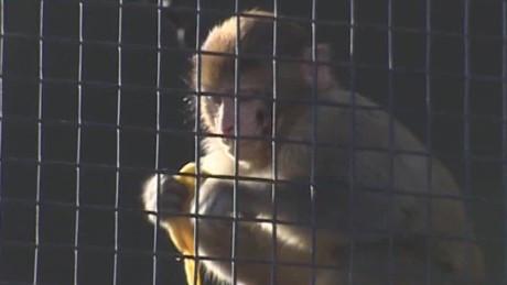 china year of the monkey rivers pkg_00020428.jpg