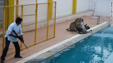 A man with a tranquilizer gun looks on as a leopard attacks a man by the swimming pool of a school in Bangalore, India, Sunday.