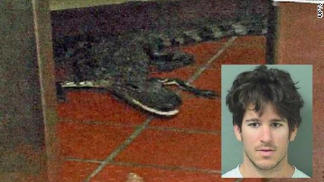 Joshua James and the alligator he's accused of throwing into a Florida Wendy's.