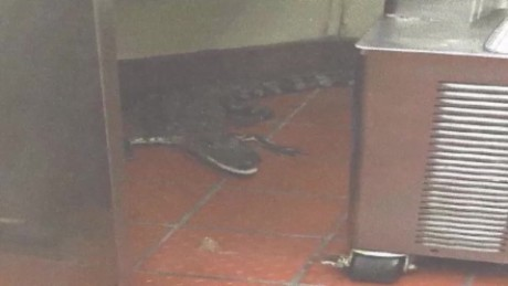 man throws alligator in wendy's wptv dnt_00004611.jpg