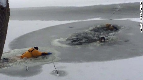 Guilford, Connecticut  firefighters rescued two huskies from Mill Pond, after they fell through the ice.