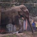 01 wild elephant 0210