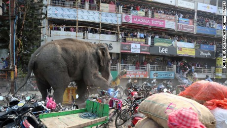 TOPSHOT - Indian bystanders watch as a wild elephant with a tranquliser dart in its back side walks along a street in Siliguri on February 10, 2016. The adult male elephant was tranquilised and captured by wildlife officials and transported to a nearby forest. AFP PHOTO / Diptendu DUTTA / AFP / DIPTENDU DUTTA        (Photo credit should read DIPTENDU DUTTA/AFP/Getty Images)