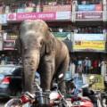 03 wild elephant 0210