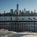 birds hudson river skyline