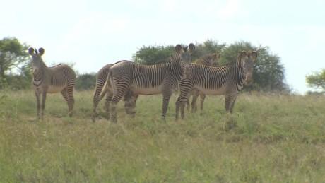 kenya grevys zebra robin kriel _00020829