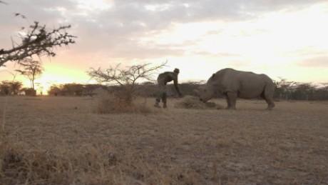 white rhino natalie allen_00000000.jpg
