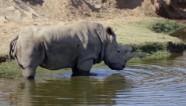 WildAid Rhino Conservation