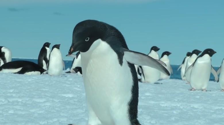 150k penguins die due to iceberg