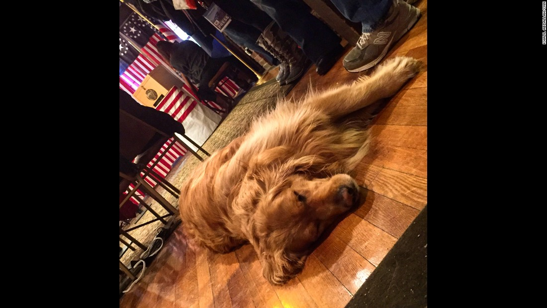 """NEW HAMPSHIRE: """"Sophie the dog has given up on staying up late for the first vote in the New Hampshire Primary. In the background you can see the ballot box for the town of Dixville Notch. Voting starts at midnight and wraps up pretty quick -- after all -- 9 people get to vote in this town."""" - CNN's Khalil Abdallah <a href=""""http://instagram.com/madcameraman"""" target=""""_blank"""">@madcameraman</a>, February 8."""