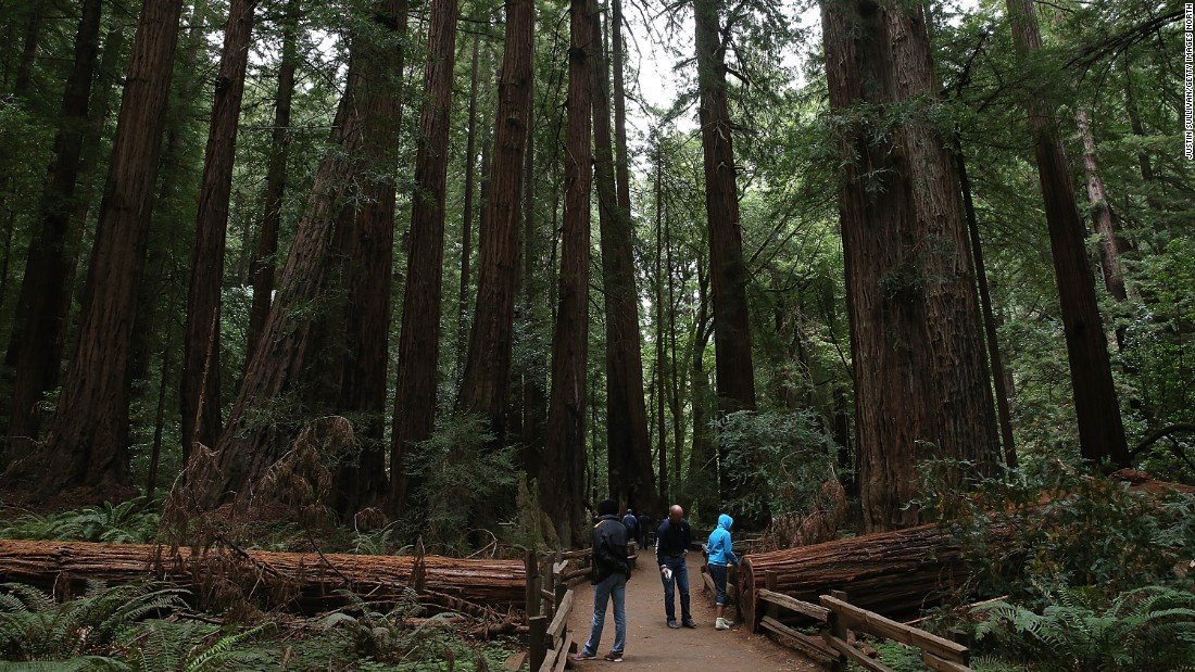 """Golden Gate National Recreation Area, which encompasses 80,000 acres across three counties, had 14.8 million visitors last year. One of its <a href=""""http://www.nps.gov/goga/planyourvisit/index.htm"""" target=""""_blank"""">spectacular spots is Muir Woods</a>, shown here, where visitors can see coastal redwood trees."""