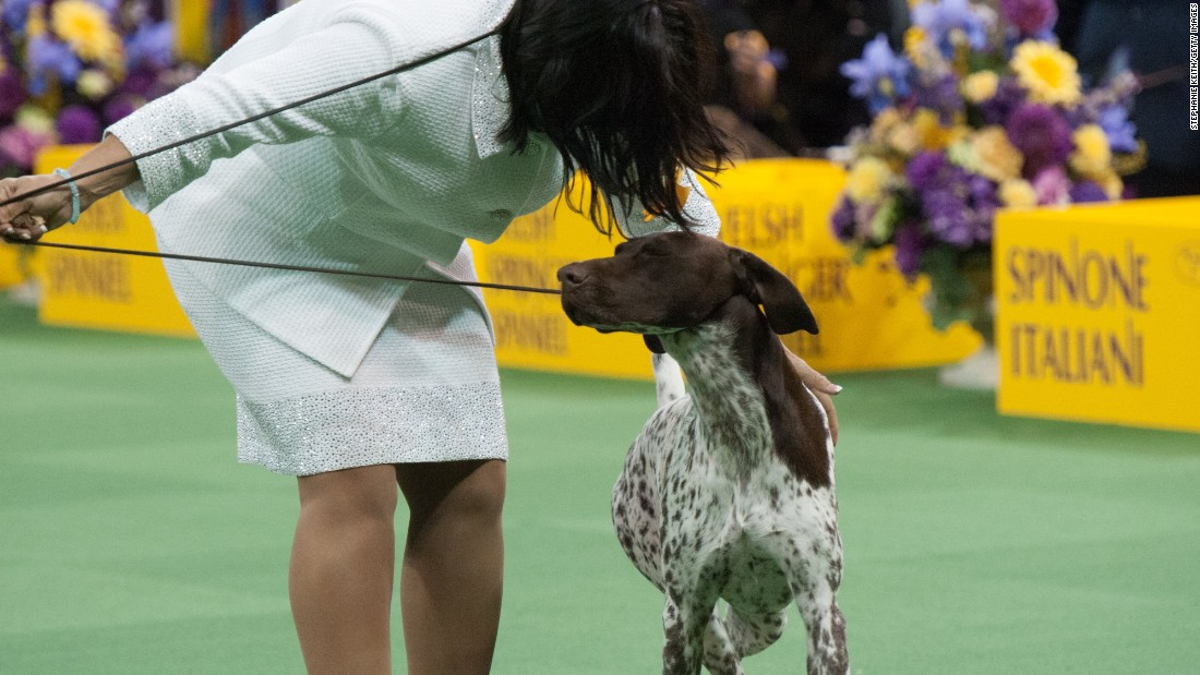 Watch News About The Westminster Dog Show