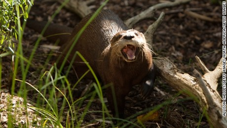 Zoo otter death blamed on pair of pants