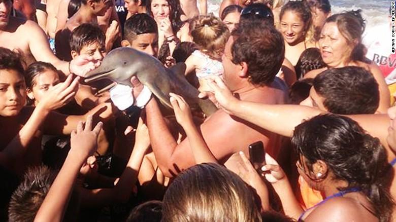 Outrage over dolphin's beach death