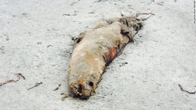 Most of the dead sea lions that are washing up along northern Chile are newborn pups. The deaths are part of a widespread die-off observed elsewhere on South America's Pacific coastline. Part of the problem:  El Niño.