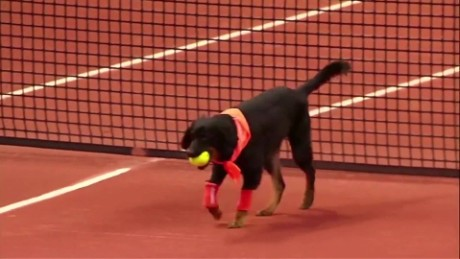 Ball dogs show their stuff at Brazil tennis exhibition