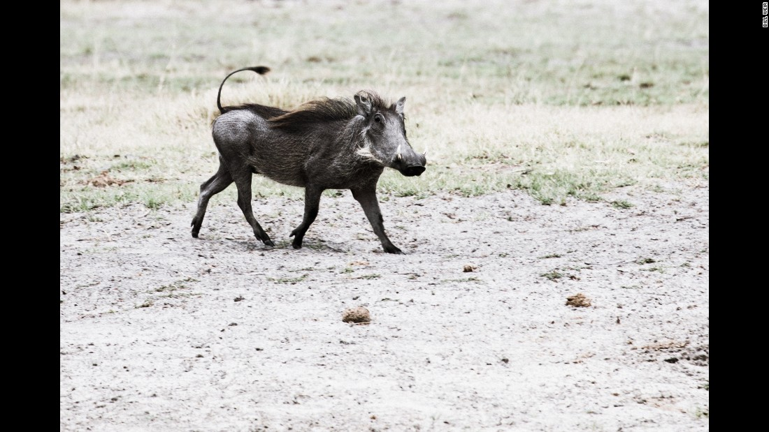 Thanks in part to Botswana's progressive wildlife conservation laws, many parts of the wetland encompass a diversity (warthogs and all) rarely found outside Disney films.