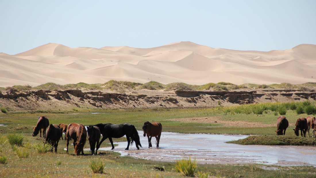 """This was a special ecosystem in South Mongolia, where water ran behind the dunes,"" says Marquis. ""It was a precious water supply for both me and the animals."""