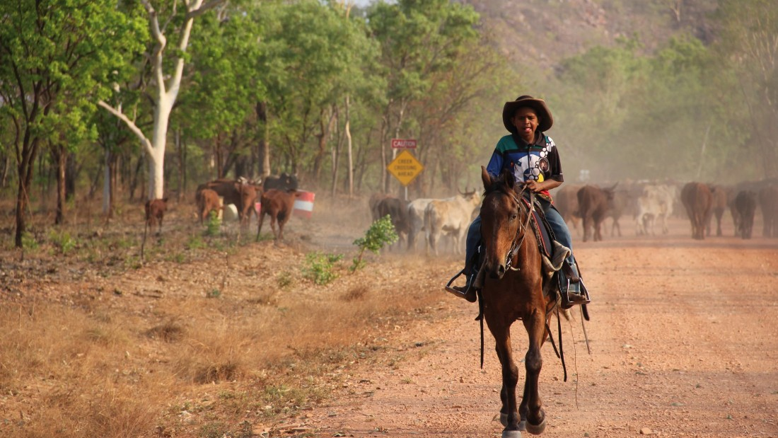 An aboriginal boy looks after cattle in the Australian outback, where temperatures can reach over 40 degrees C (104 F).