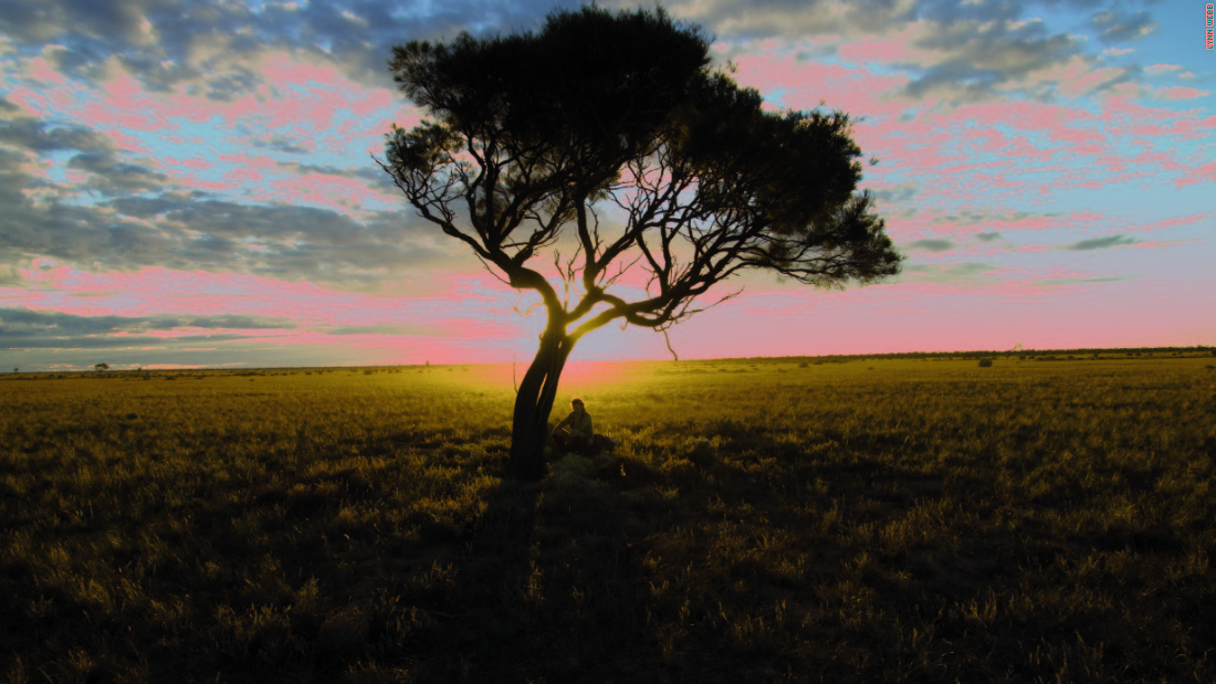 Where land meets sea: This tree in South Australia marks the spot where Marquis finished her extraordinary 1,000 day adventure.