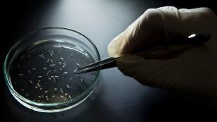 White House to redirect unused Ebola money to prepare for Zika virus