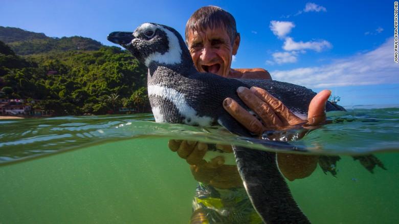 マゼランペンギン ブラジル