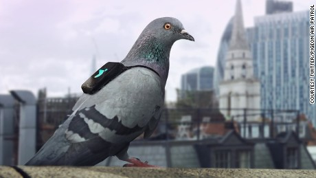 Pigeon Air Patrol is a go! Birds with backpacks track air pollution