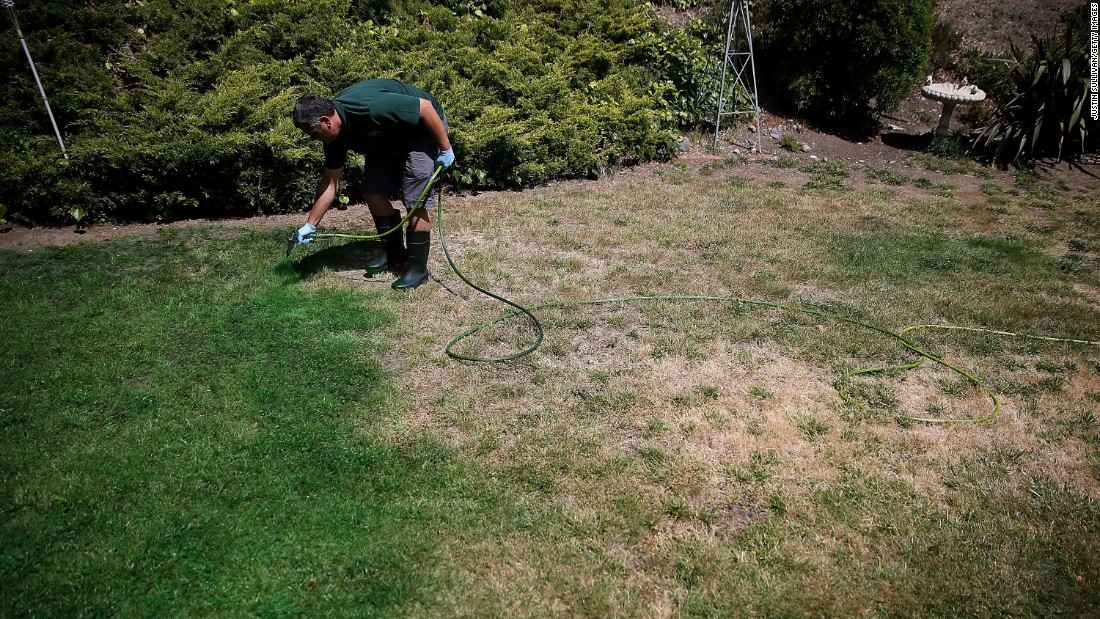 A man applies green paint to a brown lawn in Novato, California, in May.