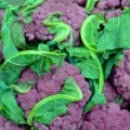 purple cauliflower 2