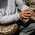 Burmese Python florida