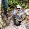Burmese Python Removal florida