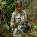 Burmese Python capture florida