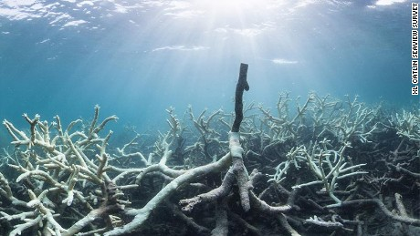Dramatic coral bleaching in the Great Barrier Reef from March 2016