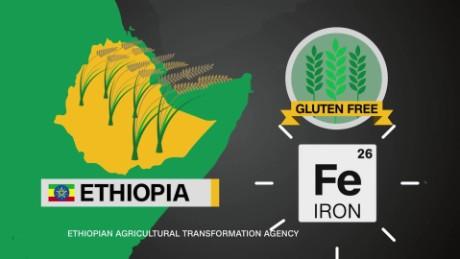 teff superfood ethiopia injera africa view spc_00004612